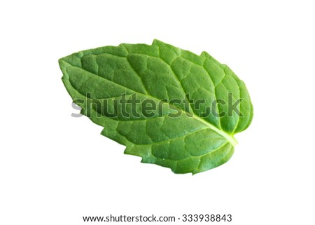 Fresh Peppermint Leaf Isolated On White Background
