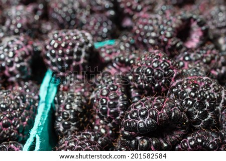 Fresh picked black raspberries on display at the farmer market