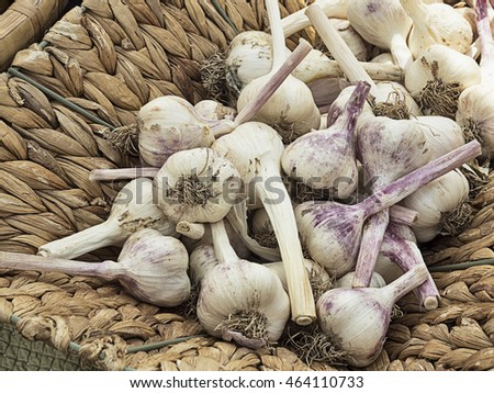 Fresh picked garlic heads in a wicker basket for sale at market