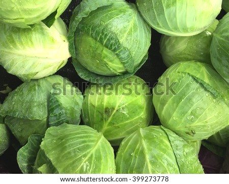 Fresh picked heads of lettuce make a lettuce background - stock photo