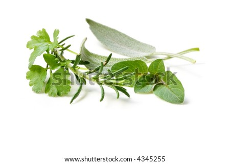 Fresh-picked herbs isolated on white.  Includes parsley, sage, rosemary and oregano.