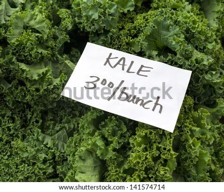 Fresh picked Kale at Maryland farm market. - stock photo