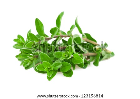 Fresh-picked marjoram isolated on white - stock photo