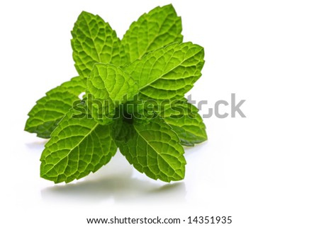 Fresh-picked mint leaves, backlit with natural light, casting soft shadow.
