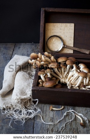 fresh picked mushrooms on vintage wooden box on rustic table with notes, magnifying glass and frayed cloth - stock photo