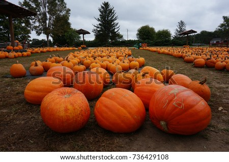 Fresh Picked Pumpkins For Sale at Market