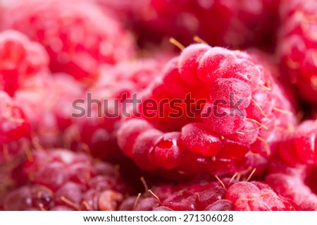 Fresh picked ripe red organic raspberries background. Selective focus on the front berry. - stock photo