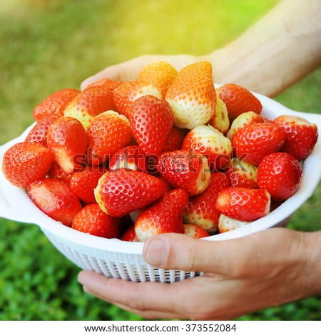 Fresh picked strawberries  - stock photo