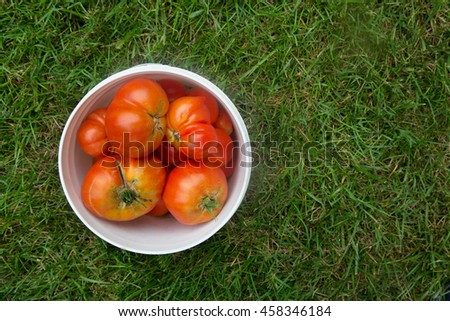 fresh picked tomatoes in bucket - stock photo