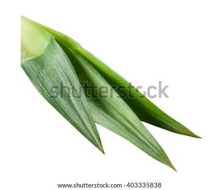 Fresh pineapple leaves isolated on white background. With clipping path. - stock photo