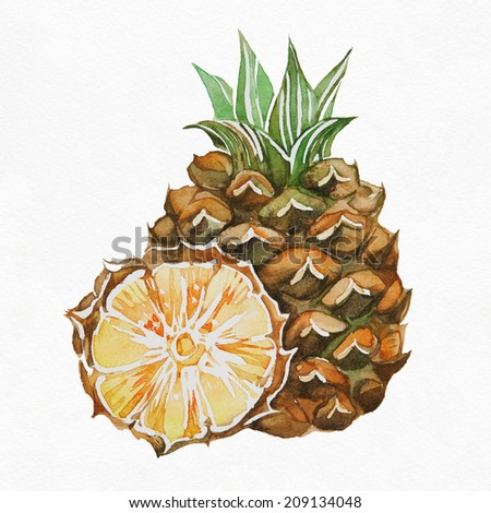 Fresh pineapple. Watercolor painting on white background. - stock photo
