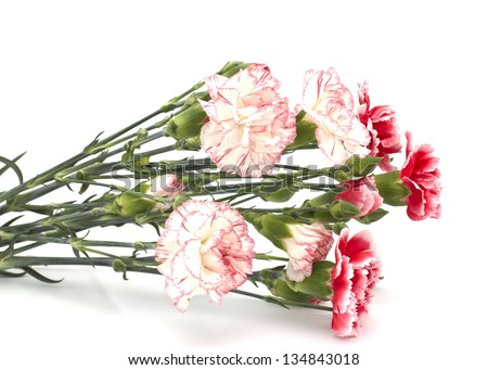 Fresh pink and white carnations  isolated on white background.