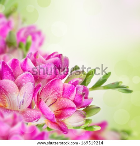 Fresh pink flowers on green blurred background with bokeh effect - stock photo