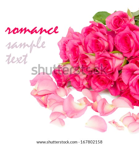 fresh pink  roses  bouquet with petals close up isolated on white background