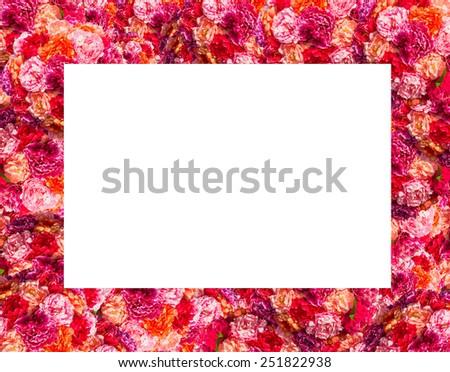 Fresh pink roses frame border isolated on white background - stock photo