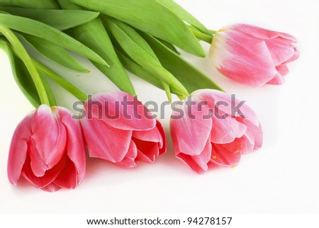 Fresh pink tulip flowers isolated on white - stock photo