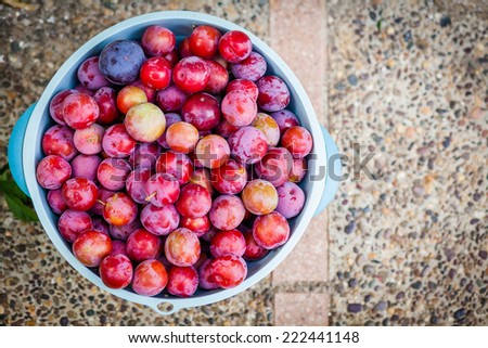 Fresh plums in a plastic container - stock photo