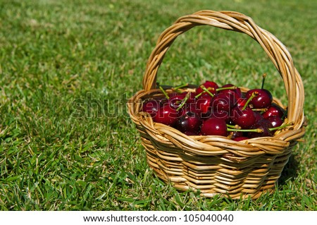 fresh portuguese cherries in a wicker basted (focus on the foreground, grass background)