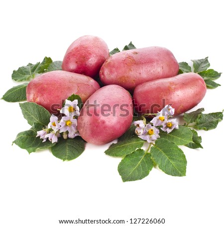 fresh potatoes with green leaves isolated on white background - stock photo