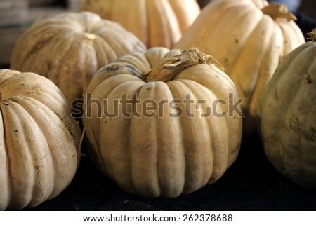 fresh pumpkin squash cucurbit on dark background farmers market - stock photo