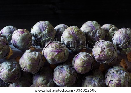 Fresh purple brussels sprouts on the stalk against a dark black background. A small, tasty vegetable resembling a miniature cabbage popular as an accompaniment to a roast dinner at Christmas.  - stock photo