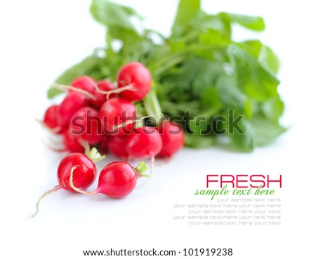 Fresh radish isolated on white background - stock photo