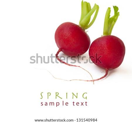 Fresh radish isolated on white background with sample text - stock photo