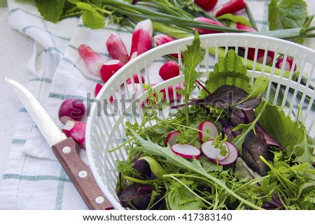 Fresh radishes and lettuce, arugula, watercress, Swiss chard, chives - stock photo