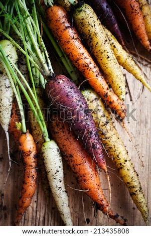 Fresh rainbow carrots picked from the garden - stock photo