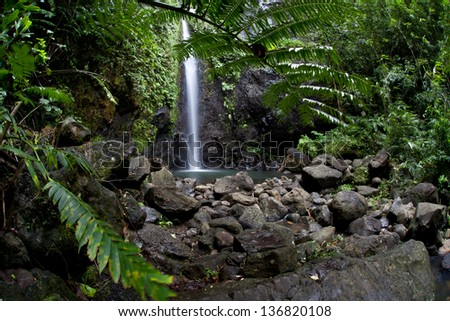 Fresh rainwater flows through a pristine rainforest on the island of Raiatea in French Polynesia.  This island has both beautiful reefs and forests to explore. - stock photo