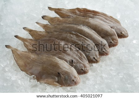 Fresh raw common sole fishes on ice
