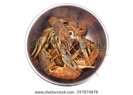 Fresh raw crayfishes in the iron bowl isolated on white background. Top view. - stock photo