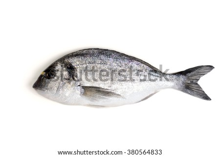 fresh raw dorado fish on isolated background