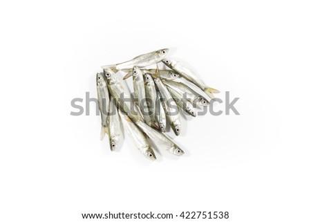 Fresh raw fish,Fingerlings,Seven-striped barb, Julian's golden carp Isolated on white background - stock photo