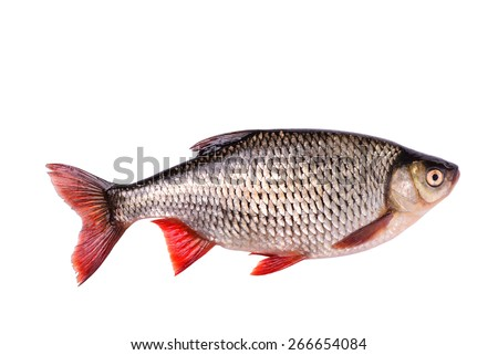 Fresh raw fish isolated on white background with clipping path - stock photo