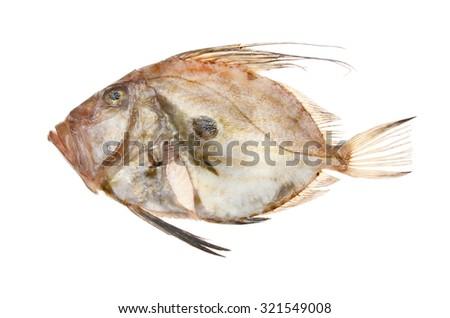 Fresh raw John dory fish isolated against white - stock photo