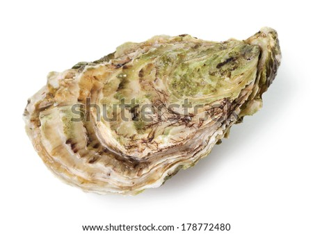 Fresh raw oyster on white background - stock photo