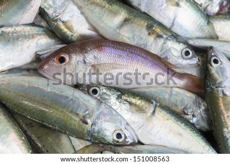 Fresh raw red snapper and mackerel fish in market