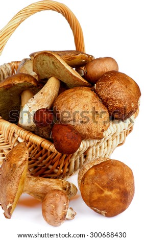 Fresh Raw Ripe Porcini Mushrooms, Orange-Cap Boletus and Peppery Bolete in Wicker Basket closeup on white background - stock photo