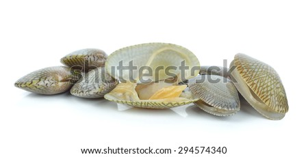 Fresh raw Surf clam on a white background. - stock photo