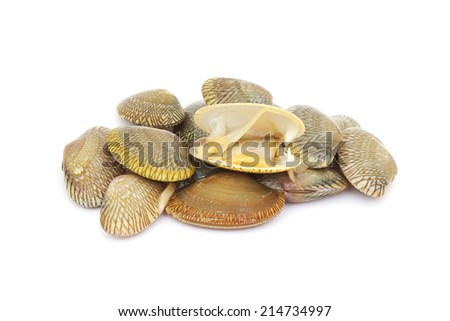 fresh raw surf clams on white background