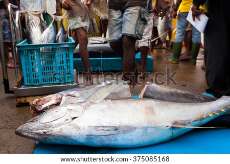 Fresh raw tuna fish at the market - Beruwela, Sri Lanka