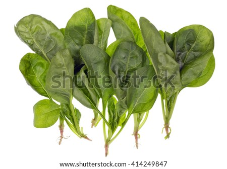 Fresh real green pure spinach with roots just from a spring vegetable bed. Isolated on white