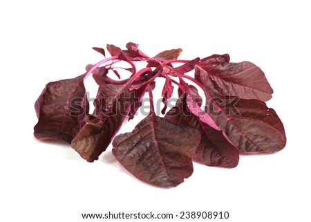 Fresh red amaranth or red spinach over white background - stock photo