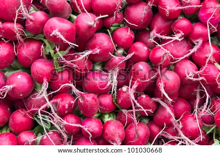 Fresh red radishes on display at the farmers market - stock photo