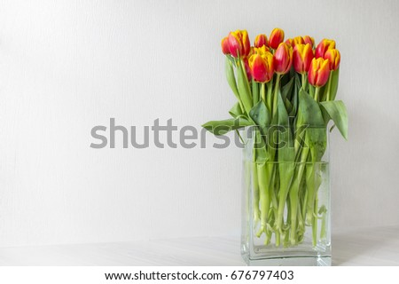 Fresh red with yellow tulip flowers bouquet in glass vase. White background. View with copy space.