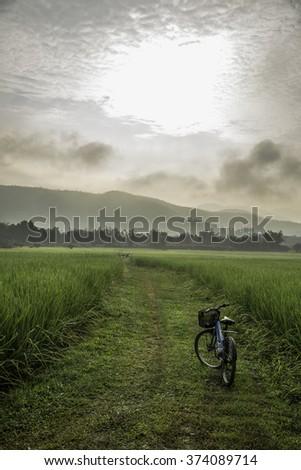 Fresh rice field over the mountain range and beautiful sunset - stock photo