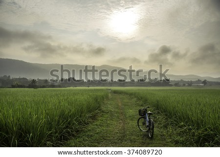 Fresh rice field over the mountain range and beautiful sunset