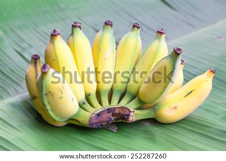 Fresh ripe bananas on banana leaf background - stock photo