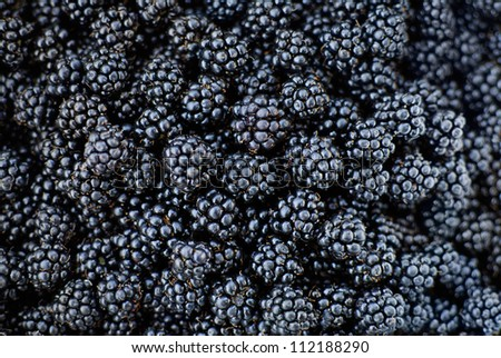 Fresh Ripe Blackberries - stock photo